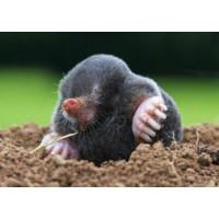 Зачем нужен на огороде и как действует отпугиватель кротов