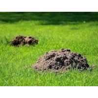 Как избавиться от кротов на огороде, дачном, приусадебном участке, в саду