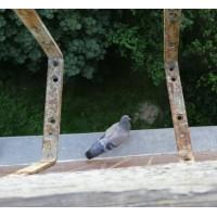 По теплу знайде і спалахами + ультразвуком відлякає! УЗ відлякувач від голубів та інших птахів