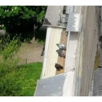 Голуби на балконі і методи боротьби з ними