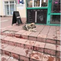 Не нарушает ли отпугиватель собак их права ?