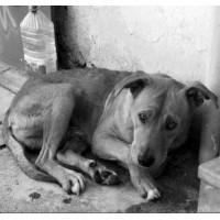 Є шанс що Київрада затвердить програму щодо гуманного ставлення до тварин