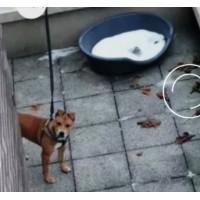 Європейські цінності - за погане поводження з собакою в'язниця і штраф