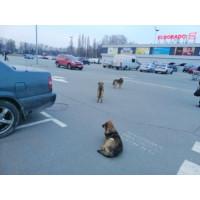 Как выбрать отпугиватель собак ?