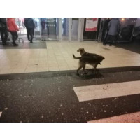 ТОП-12 питань-відповідей про відлякувач собак