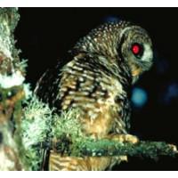 Інфрачервоний зір і нічне бачення у тварин, комах і птахів