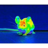 Не тільки енергоаудит - де ще можуть застосовуватися тепловізори