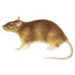 Ультразвукові відлякувачі гризунів, мишей та щурів