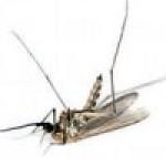 Знищувачі літаючих комах, комарів