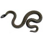 Відлякувачі змій, вужів та гадюк