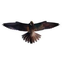 Візуальний відлякувач птахів Хижак-2 (Чеглок)