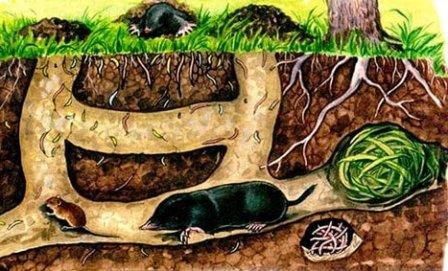 система подземных тоннелей кротов